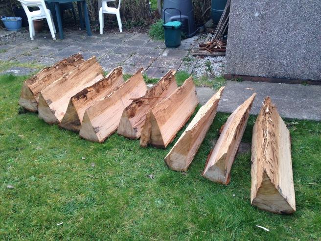 Oak sections split out